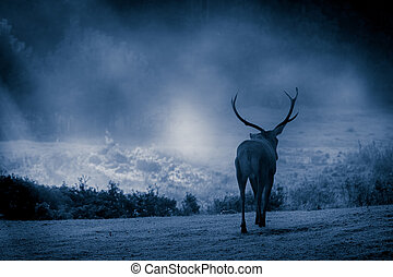 Majestic bull walking on the meadow at moonlight