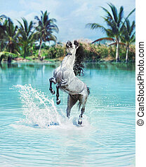Majestic horse jumping in the pool