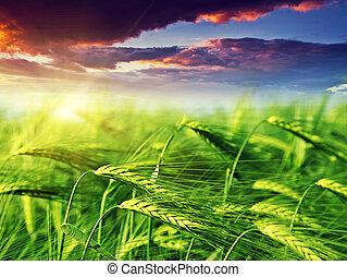 field - Majestic landscape in the field under daybreak