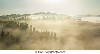 Majestic landscape with forest