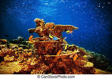 Majestic marine life, beautiful natural background, coral ...