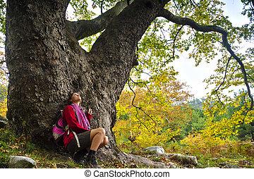 Majestic old tree