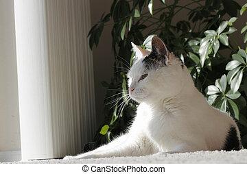 Majestic Pose of Kitty Cat