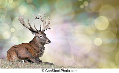 Mature stag seated on grass on left with light behind head on a bokeh background and plenty of copy space on right hand side