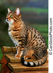 A Bengali special breed kitten sitting on top of a bird box.