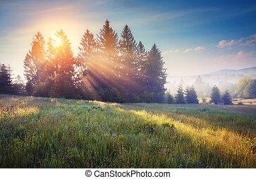 Majestic summer landscape
