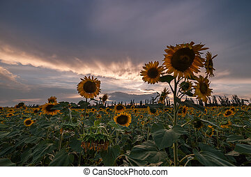 Majestic sunset agricultural landscape