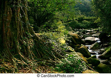 Majestic Taiwanese Forest - Majestic Taiwanese old growth...