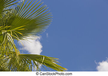 Majestic Tropical Palm Trees Against Blue Sky and Clouds