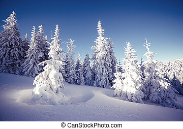 Majestic winter landscape glowing by sunlight in the morning...