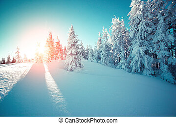 Majestic winter landscape glowing by sunlight in the...