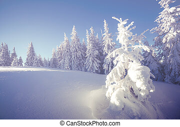 Majestic winter landscape glowing by sunlight in the...