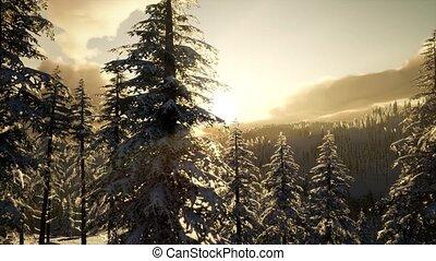 Majestic Winter Landscape Glowing by Sunlight - majestic...