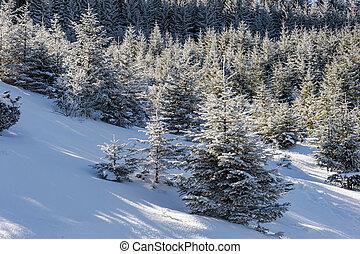 Majestic winter landscape
