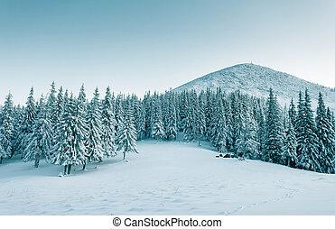 Dramatic wintry scene - Majestic winter trees glowing by...