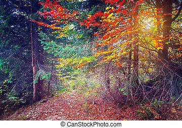 majestueux, forêt, coloré