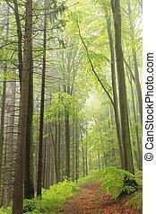 majestuoso, primavera, bosque
