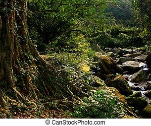 majestuoso, taiwanés, bosque