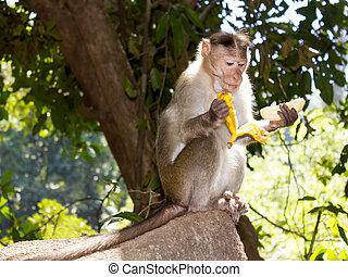 """Képtalálat a következőre: """"majmok banánnal"""""""
