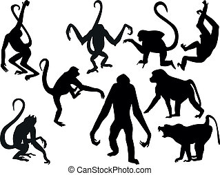 majom, körvonal, -, gyűjt, vektor