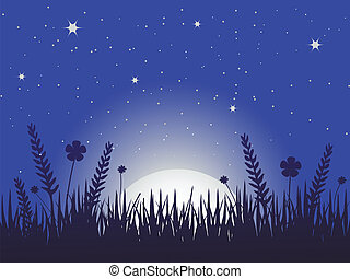 mak, łąka, noc