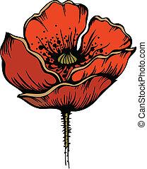 mak, kwiat, czerwony