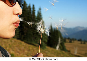 Make a wish by blowing on dandelion