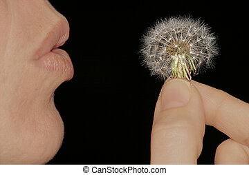 Make a wish - Making Wishes
