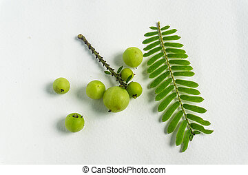 Makhampom on a white background is a medicinal herb used to treat sore throat
