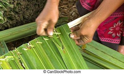Making a nipa palm thatch panel, Rakhine , Myanmar - Extreme...