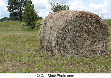 Making hay - Haying. Beveled and prepared for transport hay.
