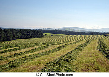 making hay in autumn