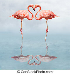 making love - Flamingos in water making a heart shape