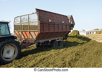 making silage stocks for animal feeding in winter.