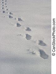 making tracks - an animal's tracks in a freshly fallen snow