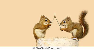 Making wishes. - Funny young squirrels on a log with a...