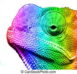 makro, av, multi färgade, cameleon