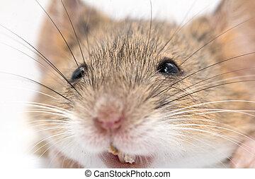 makro, kopf, mouse.