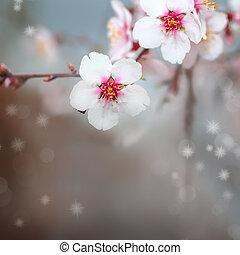 makro, skott, av, mandel, blomningen, blomstringar
