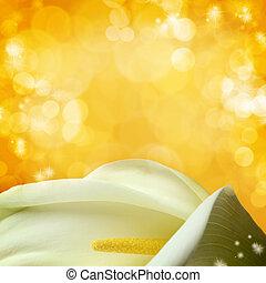 makro, skott, av, vit, calla liljor