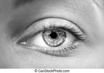 makro, woman szem, szürke