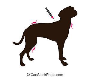 maladie, contre, chien, immunisation, moustique, obtient, morsures
