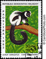 MALAGASY - CIRCA 1983 Ruffed Lemur