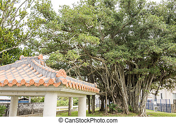 Malayan banyan tree