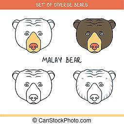 Malayan sun bear. Set isolated face, heads bear in lines