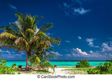 maldívok, természetes, vibráló, tropikus, lagúna, laid-back, tengerpart