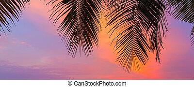 maldivas, islas, siluetas, de, árboles de palma, en, ocaso