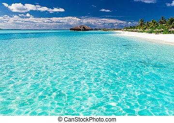 maldives, árvores, tropicais, areia, palma, praia branca
