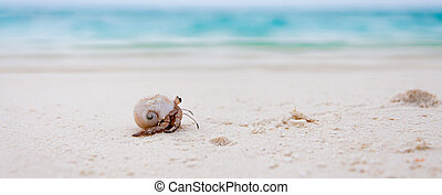Maldives are full of hermit crabs on the beach which get...