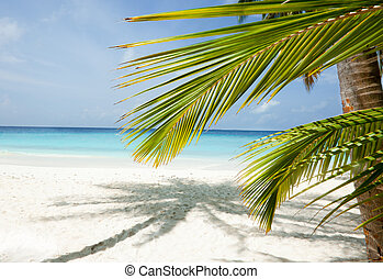 Maldives beach background with palm shadow on the white sand